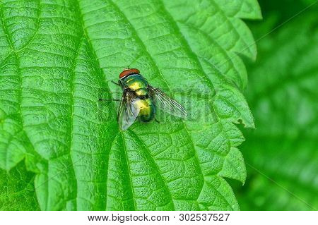 One Little Fly Sits On A Green Leaf Of A Plant In Nature