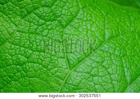 Natural Plant Texture From The Structure Of The Green Leaf Of The Plant