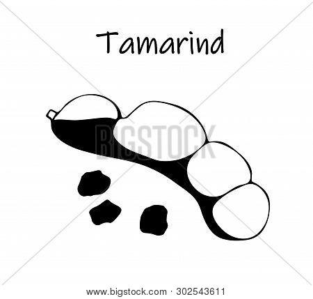 Vector Illustration Of Black Tamarind, Kranzhi, Tamarind Plum - Asian Beans. Sketch Spice.