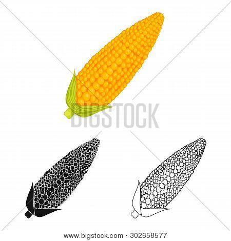 Vector Illustration Of Corn And Sweetcorn Logo. Set Of Corn And Ripe Stock Vector Illustration.