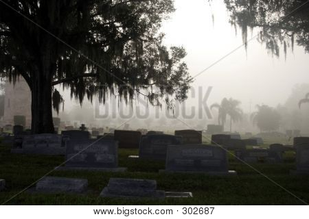 Morning For In Cemetary