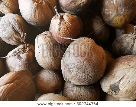 The  Old Coconut And Coir  Image For Food Content.