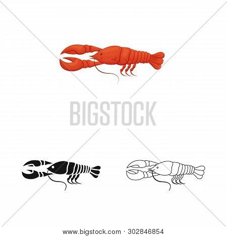 Isolated Object Of Crayfish  And Lobster Logo. Collection Of Crayfish  And Boiled Stock Vector Illus