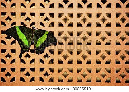 Butterfly Incept Wooden Wall Background Day Light