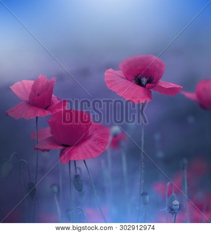 Beautiful Blue Nature Background.Macro Photo of Amazing Magic Red Poppy Flowers.Border Art Design.Magic light.Extreme close up Photography.Conceptual Abstract Image.Fantasy Floral Art.Creative Artistic Wallpaper.Web Banner.
