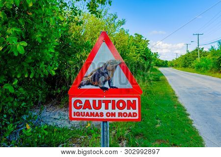 Road Sign Find On Little Cayman Island Warning Drivers Of Iguanas On The Road