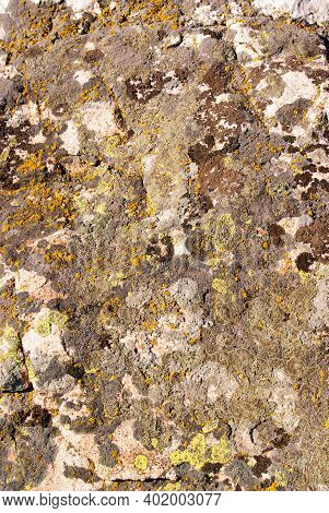 Granite Mossy, Texture, Close-up. Background. A Mossy Ground In The Garden