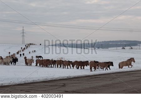 Batch Of Horses Running Across The Road. Selective And Soft Focus. Winter Landscape With Horses And