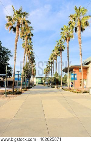 January 4, 2021 In Fullerton, Ca:  Pedestrian Pathway Lined With Palm Trees Surrounded By Campus Bui