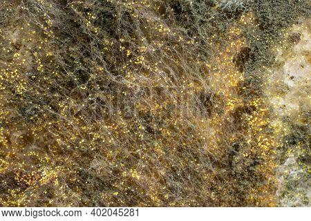 Yellow Mold Spores Macro Shot With Detail Visible