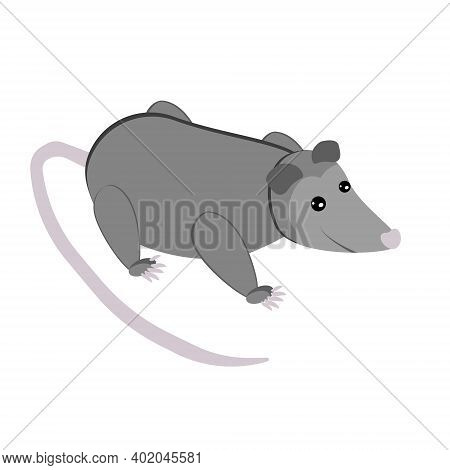 Possum, Cute Gray Marsupial In Flat Style, Wild Animal With Long Tail Vector Illustration
