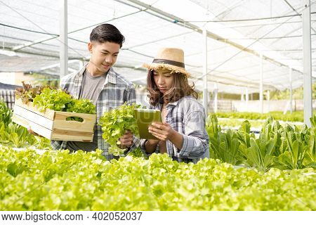 Hydroponics, Two Asian Farmers Own A Vegetable Farm, Use A Tablet To Monitor Temperature Control, An