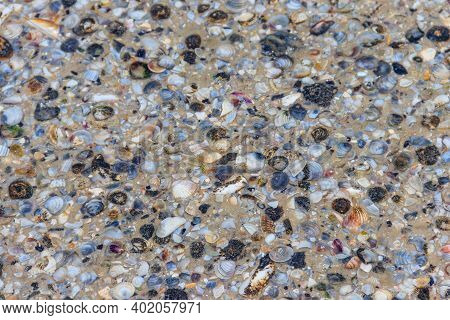 An Abstract Ackground Of The Sea Shells