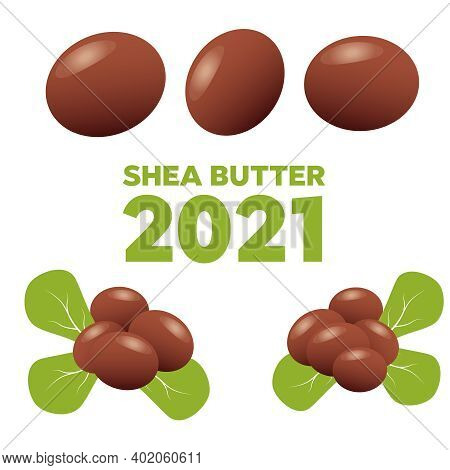 Shea Nuts Fruit Natural Organic Butter Ingredient.