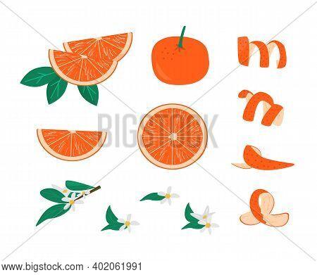 Zest, Leaves And Brunch With Flower Of Orange Fruit Set Vector Illustration. Collection Of Tangerine