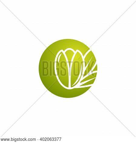 Argan Nut In Green Circle Icon. Beauty And Cosmetics Oil. Cosmetic Ingredient Carotene, Carotin.