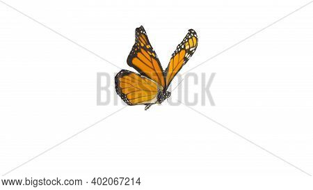An Orange Monarch Butterfly In Its Flying Pose Isolated On White Background  Isolated On White Backg