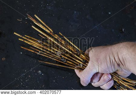Man's Hand Holds Group Of Dirty Bamboo Skewers With Leftover Food.  Angled View Of The Used Wooden S