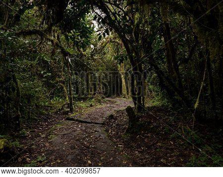 Stone Hiking Trail Path In Tropical Rainforest Leading To Catarata Del Gocta Waterfall In Amazonas N