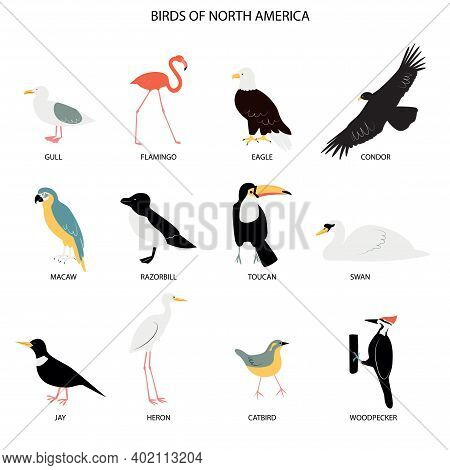 Illustration With Birds Of North America - Gull, Flamingo, Eagle, Condor, Macaw, Razorbill, Jay, Her