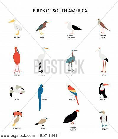 Set With Virds Of South America. Pelican, Heron, Stork, Agami, Macaw Etc. Cute Cartoon Character. Fl