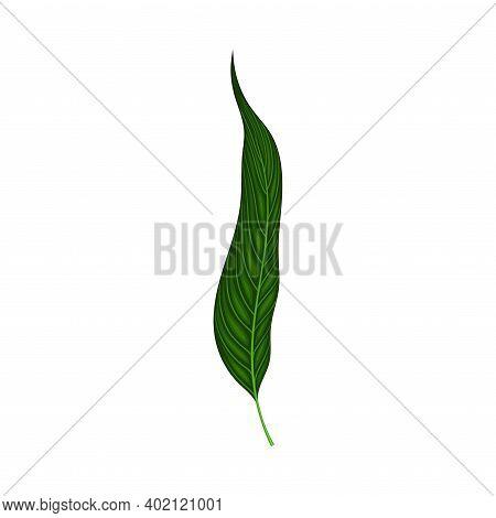 Fern Or Frond Leaf With Erect Stem Vector Illustration