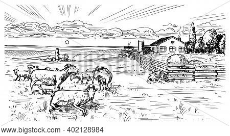 Rural Meadow. A Village Landscape With Sheep, Hills And A Farm. Sunny Scenic Country View. Hand Draw