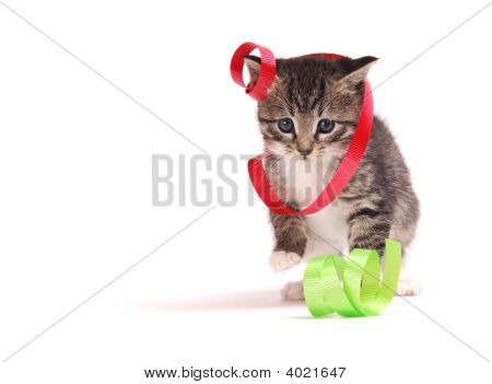 Kitten Playing With Ribbons.