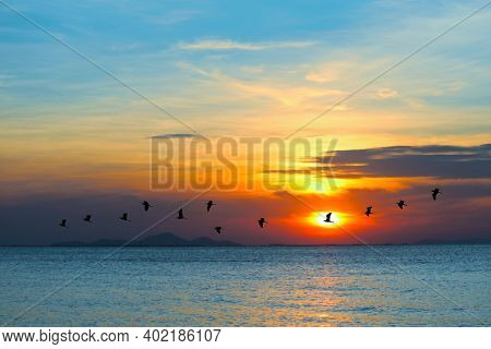 Sunset On Sea And Silhouette Birds Flying To Home Over Sea Surface