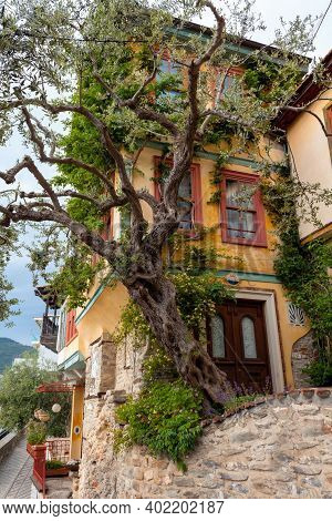 View Of A Big Old Tree In Front Of Typical House In Kavala, East Macedonia And Thrace, Greece.