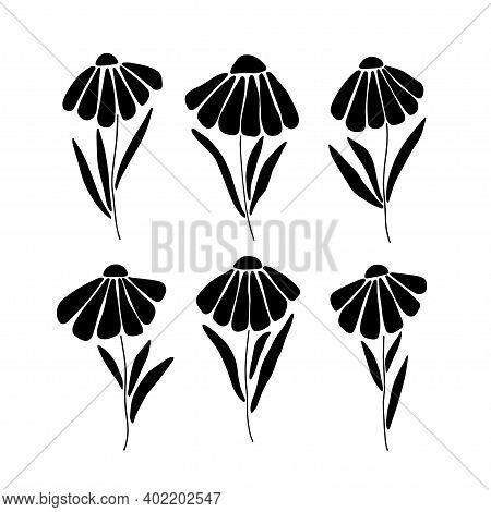 Daisy Black Flower Silhouette Set. Marguerite Flat Vector Illustration Isolated White Background. Sc