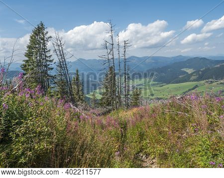View On Village Liptovska Luzna With Pink Blooming Flowers At Foothills Of Low Tatras Mountains With