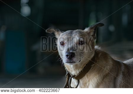 Homeless Dog Behind The Bars In Shelter. Cute Dog In Animal Shelter. Mongrel Dog In Shelter