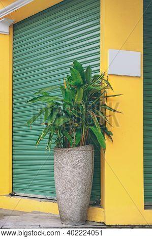 Plant In A Gray Concrete Pot Against A Yellow Column And Green Shutters Wall.  Strelitzia Reginae (b