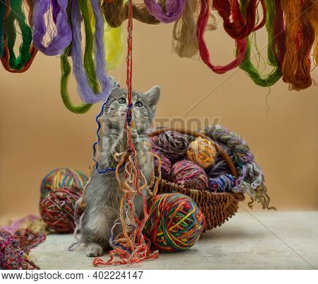 Cat With Balls Of Threads In A Wattled Basket. Cutest Kitten Sitting Next To A Basket With Balls Ske