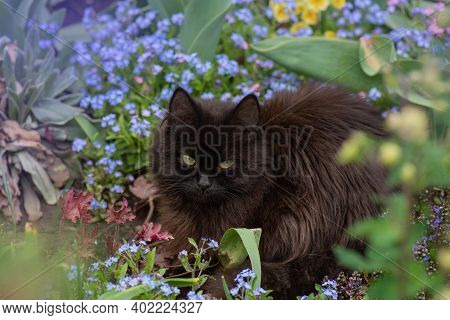 Black Cat With Forget Me Nots