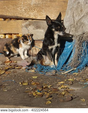 Homeless Puppies And Kittens Need Help. Street Homeless Dog And Cat. Homeless Stray Dog And Cat On T