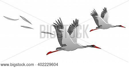 Two Gray Cranes In Flight. Wide Wings, Soaring Feathers. Vector Illustration