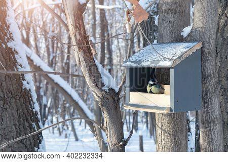 Tit And Bird Feeder In The Winter Park. Bird. Human Concern For Birds, The Problem Of Bird Survival