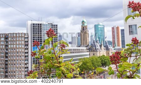 Vegetable Roofgarden On Top Of An Office Building In The Citycenter Of Rotterdam, Netherlands. The B