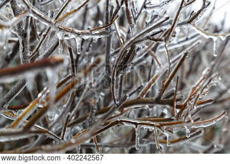 Winter Icing.  Icicles On Frozen Tree Branches On Blurred Gray Natural Background. Abstract Nature B