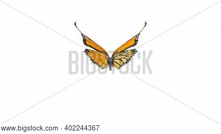Macro Shot Of Big Monarch Butterfly. Front View Of Natural Yellow Butterfly Isolated On White Backgr