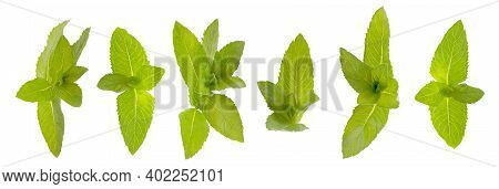 Isolated Set. Six Green Mint Leaves On White Background With Clipping Path As Package Design Element