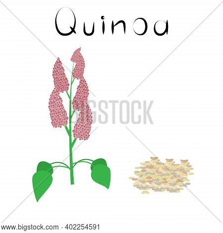 Quinoa. Healthy Detox Natural Product. Organik Dietary Supplement Food. Superfood, Seeds For Homeopa