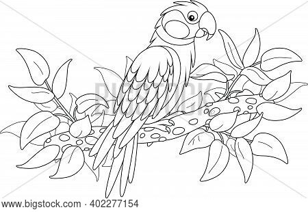 Amusing Parrot Perched On A Tree Branch In A Tropical Jungle, Black And White Outline Vector Cartoon