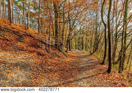Autumn Trees, Some With Brown Leaves, Some With Green Foliage And Some Bare On A Hill, A Dirt Road C