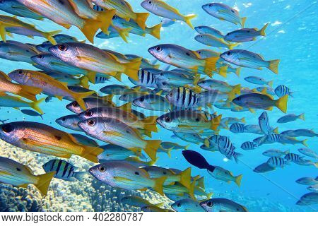 Beautiful Shoal Of Tropical Fish  In Full Diversity