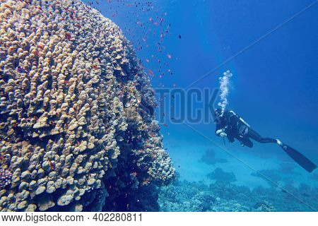 Scuba Diver Underwater Watching Beautiful Colorful Coral Reef
