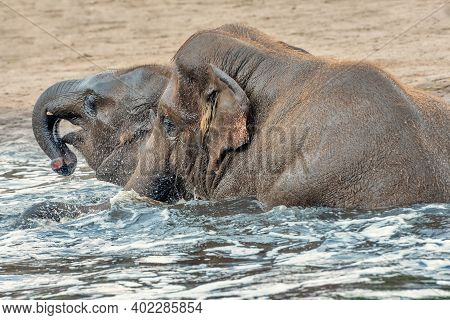 Baby Elephants Are Playing In Water