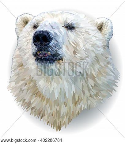 Polar Bear Portrait Isolated On White Background. The Polar Bear's Smart Gaze Is Directed At You. Il